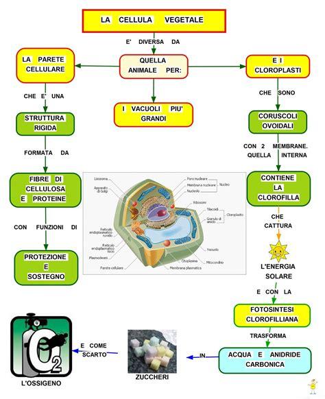 scienze dell alimentazione la cellula scienze dell alimentazione mwety 2 0