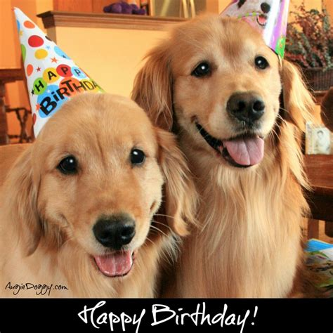 golden retriever birthday ecard 10 best images about golden retrievers in costume on apps and hippies