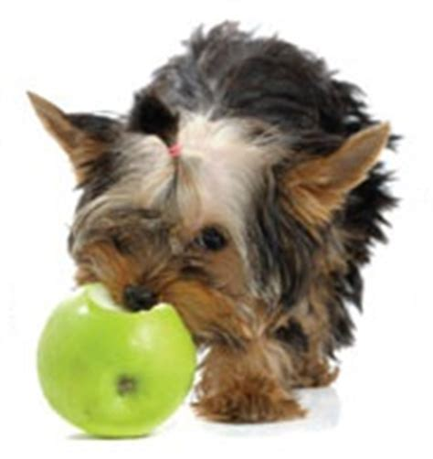 human food safe for dogs human foods safe for dogs