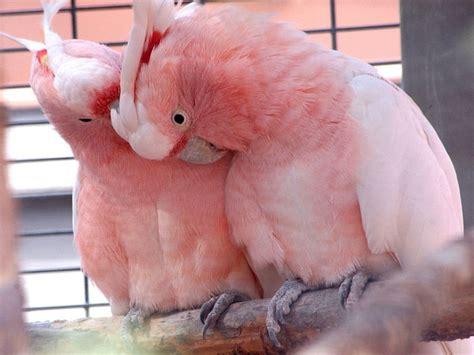 pink wallpaper with birds love birds wallpapers in pink birds pinterest bird