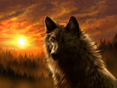 wallpaper dark wolf dark wolf wallpaper best hd wallpapers