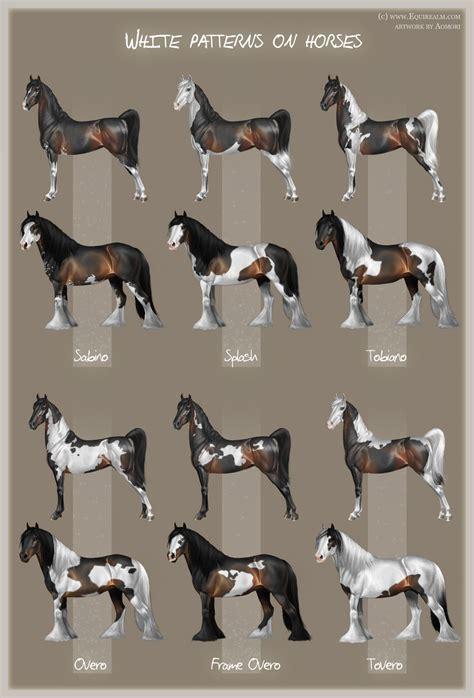 white pattern in horses tipos de caballo