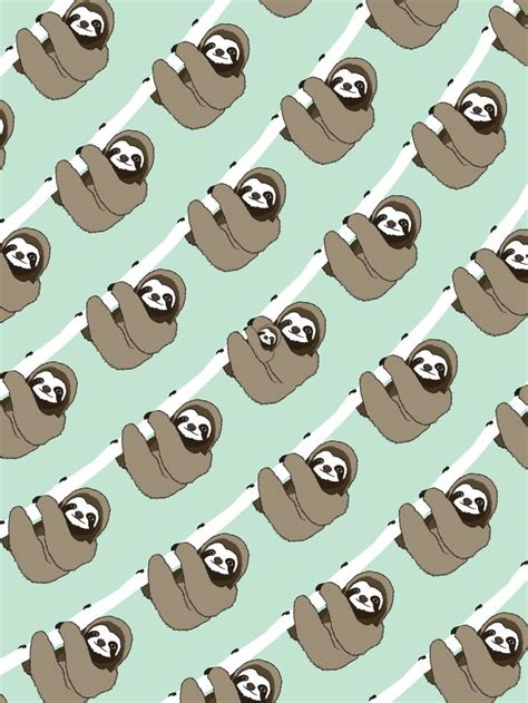 photo collection baby sloth wallpaper screen