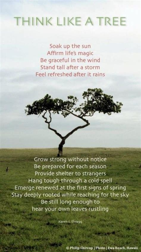 what do trees symbolize best 25 tree of life meaning ideas on pinterest tree of