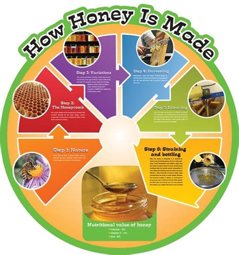 how is food cycle board how honey is made from edusentials