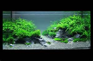 Artificial Plants For Tropical Fish Tanks - iwagumi stenen google zoeken aqua takashi amano pinterest beautiful editor and caves