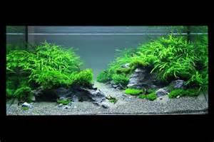 Takashi Amano   Pinterest   Planted Aquarium, Aquarium and Tanks
