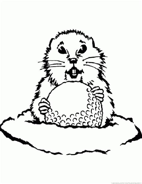 gopher snake coloring page gopher coloring pages