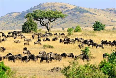 Syari Kanita kenia wczasy wycieczki last minute safari kenia