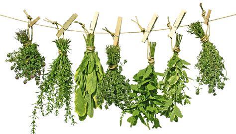 grow herbs in kitchen 100 grow herbs in kitchen indoor herb garden kit by