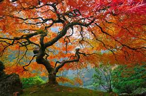 the 14 world s most beautiful trees mostbeautifulthings