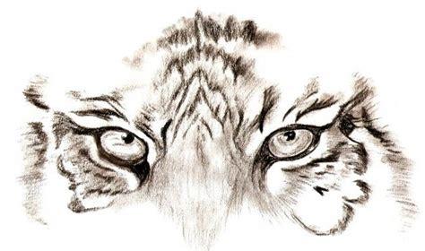 imagenes ojos de tigre ojos de tigre dibujo imagui