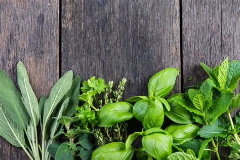 10 plants that repel bugs you want to have one of those in your backyard