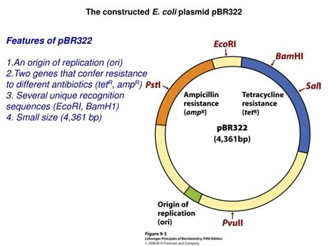 librerie genomiche ppt the constructed e plasmid pbr322 powerpoint