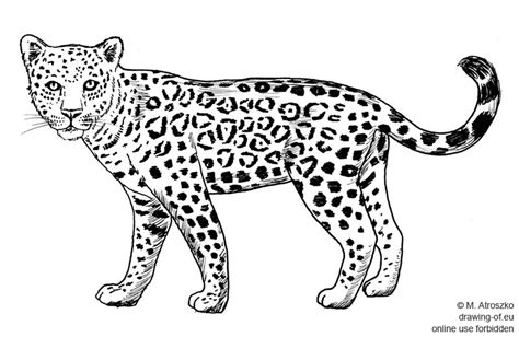 Imagenes De Jaguares Para Dibujar | jaguar dibujo dibujos