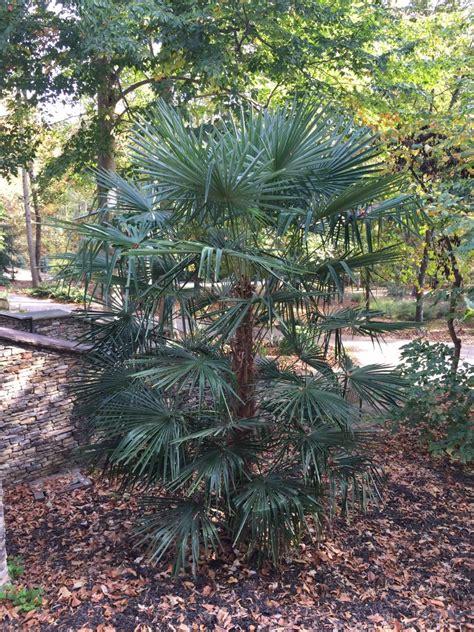 Clemson Botanical Gardens Palms Discussing Palm Trees Clemson Botanical Gardens