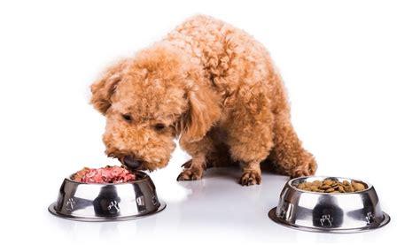 migliori alimenti per cani migliori crocchette ipoallergeniche per cani la guida