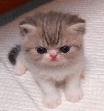 imagenes kawai de gatitos mis gifs de gatitos parte 11 mascotas taringa