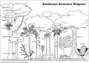 Free Coloring Pages Of Color Forest Ecosystem Rainforest Coloring Page