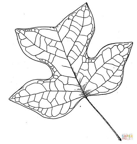 tree leaf coloring pages sycamore leaf coloring page coloring pages