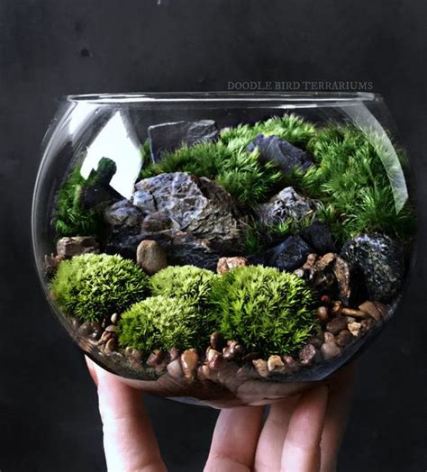 bio bowl forest world terrarium with live woodland by doodlebirdie terrariums and miniature