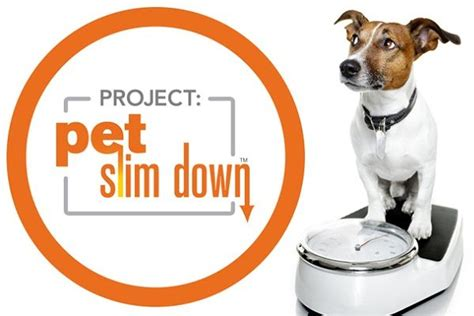 Sweepstakes Promo Text Message - project pet slim down sweepstakes sweepstakesbible