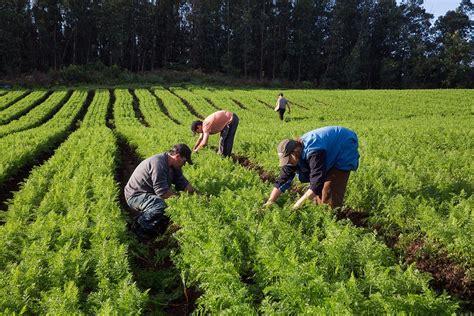 Imagenes Satelitales Para Agricultura   agricultura e impactos ambientais gpa brasil
