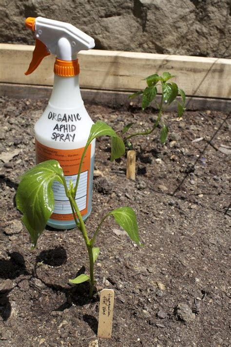 dish soap for garden pest 17 best ideas about aphid spray on organic
