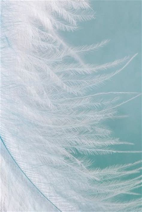 white feather wallpaper gallery