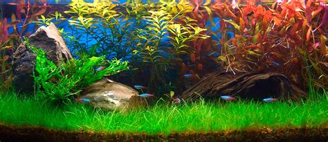 hair grass aquascape hair grass aquascape home design