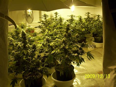 worldwide indoor marijuana grow guide the best and easy way denver ride how to grow marijuana indoors and outdoors a step by step guide on growing marijuana cannabis