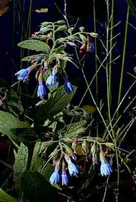 Pflanzen Für Den Gartenteich 990 by Teich Im Sommer 2