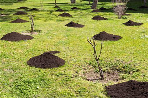 wann umpflanzen wann pflanzt wann schneiden ansteht