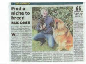 irish sunday times business section done deal dogs for sale puppies for sale dogs for sale