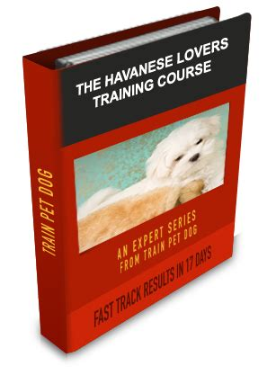 do havanese dogs bark a lot havanese learn all about havaneses taking care of them
