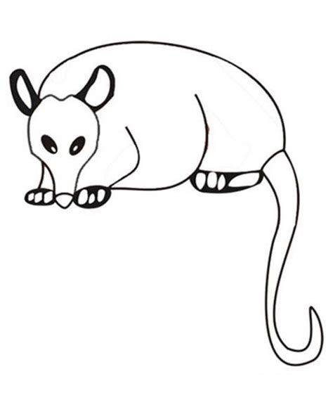 printable possum mask template possum colouring pages coloring home