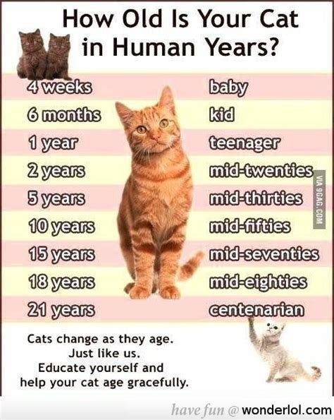 how is my in human years how is your cat in human years cats my pintere