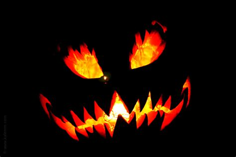 scary pumpkin images reverse search