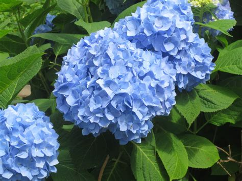 pictures of blue flowers and their names www pixshark com images galleries with a bite