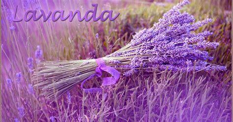 lavanda fiore significato lavanda significato