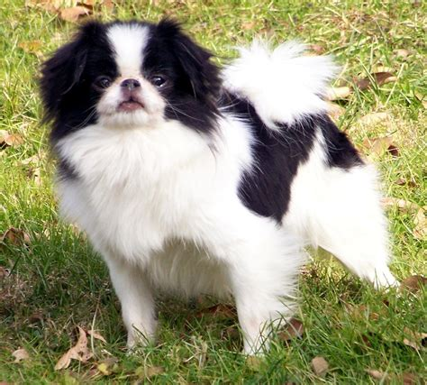 Japanese Chin Haircuts | japanese chin haircuts hairstyle gallery
