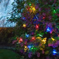 Outdoor Xmas Trees