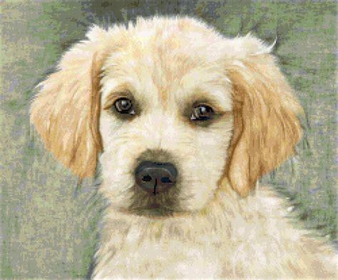 golden retriever cross stitch dogs better cross stitch