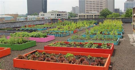 homeless plant a rooftop organic garden help feed