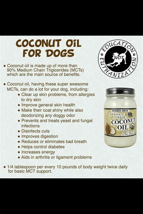 coconut for puppies 17 best images about on for dogs diy and supplements