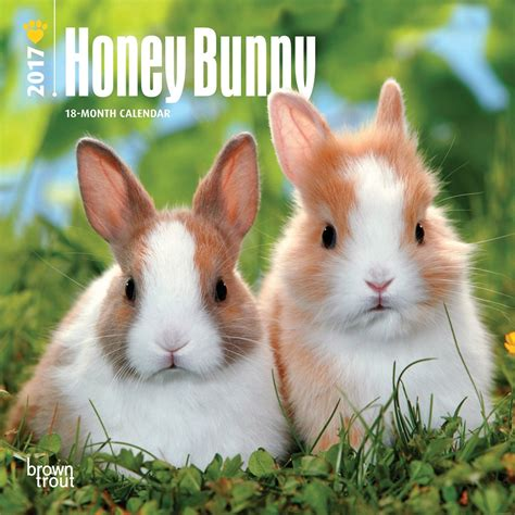 honey bunny 2017 mini wall calendar 9781465053558
