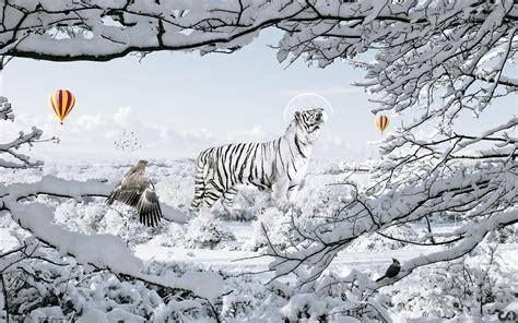 Galaxy Wall Murals tigre blanc full hd fond d 233 cran and arri 232 re plan