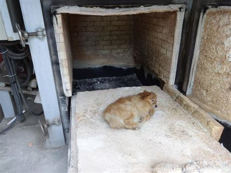 cremation for dogs waste incinerator hiclover environmental pet animal