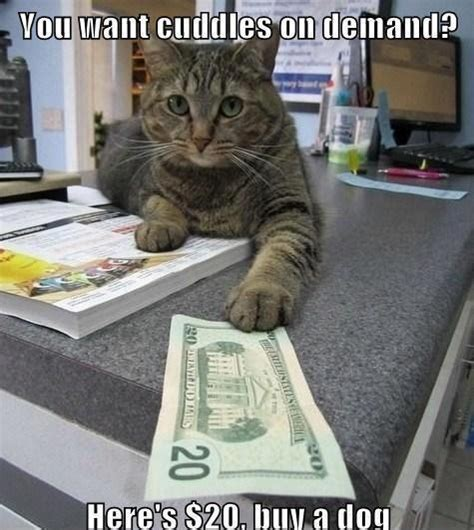 Dog Cat Meme - buy a dog funny cat meme