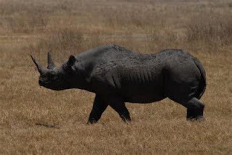 imagenes de animales extinguidos ranking de animales extintos por culpa del hombre listas